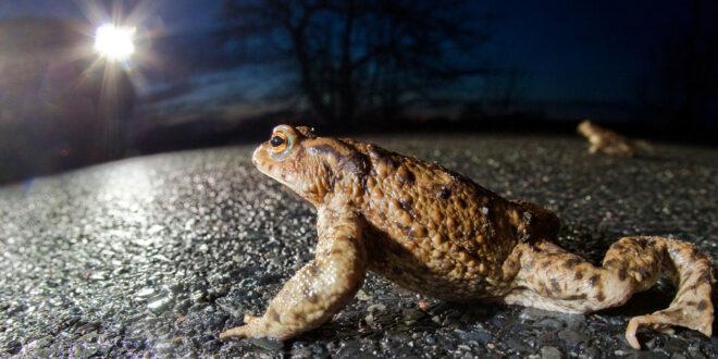 Amphibien in Bewegung