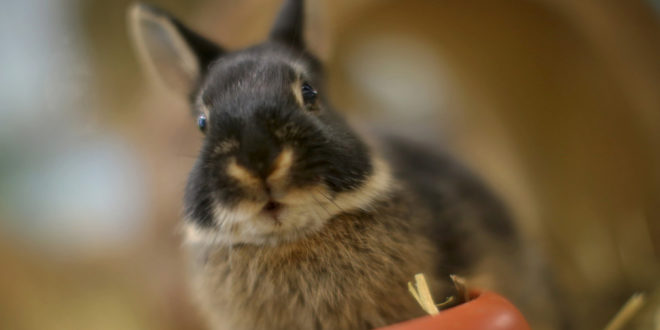 Anträge auf Finanzierung von Tierheimen sind bis zum 30. November möglich