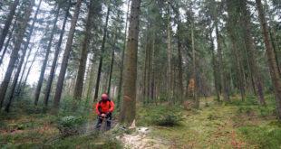 Baden-Württemberg 2050 Waldstrategie vorgestellt