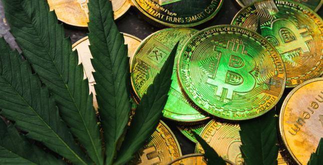 Cannabishändler akzeptieren Krypto-Zahlungen