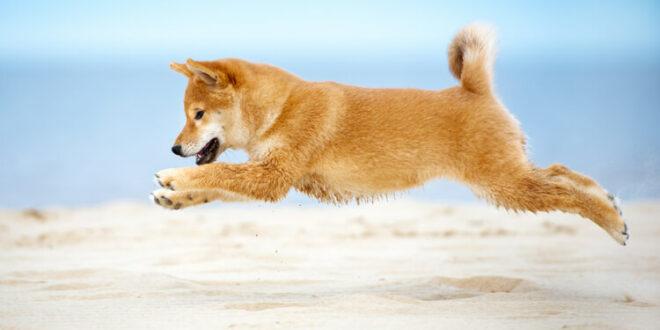DOGE steigt nach Coinbase Pro-Auflistung