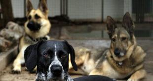 Der Staat unterstützt das Tierheim in Walldorf mit 71.000 Euro