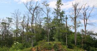 Der Waldzustand verschlechtert sich weiter