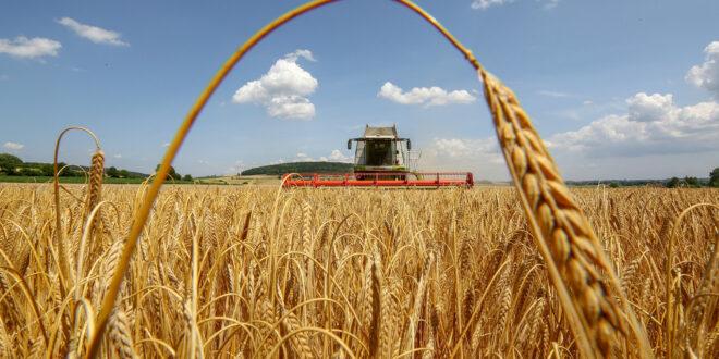 Die Landwirtschaftsministerkonferenz einigt sich auf die gemeinsame Agrarpolitik ab 2023