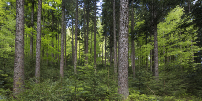 Digitales Waldsymposium des forstwirtschaftlichen Experimentier- und Forschungsinstituts