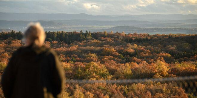 Erste Verleihung des NaturVision Filmpreises Baden-Württemberg