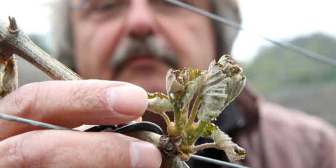 Ertragsversicherung im Obstbau und Weinbau
