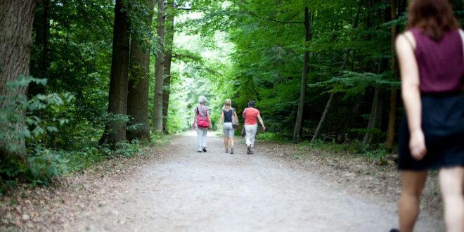 Flurbereinigung in Görwihl mit rund 770.000 Euro gefördert