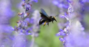 """Bericht über das Sonderprogramm """"Biodiversität"""""""