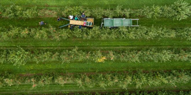 """Große Beteiligung am Pilotprojekt """"Ertragsversicherung Obst und Weinbau"""""""