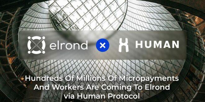 HUMAN Protocol und Elrond Network Team bis zu Excel Machine Learning