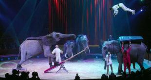 Halbherziges Verbot von Wildtieren in neuen Zirkusbestimmungen