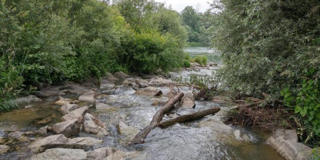 Hochwasserrückhaltegebiet am Oberrhein fertiggestellt