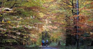 Kooperation für Wanderkarten des Odenwaldes