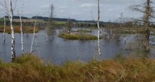 Land erwirbt Fläche im Naturschutzgebiet Wurzacher Ried