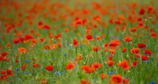 """Frist für das Förderprogramm """"Blütengebiete und Biodiversitätspfade"""" verlängert"""