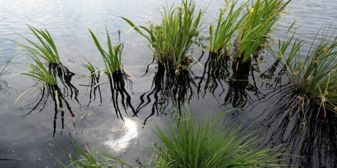 Land hat Gebiete erworben, die für den Natur- und Klimaschutz wichtig sind