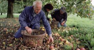 Der vierte Obstgartenpreis des Landes wird ausgeschrieben