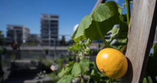 Klimaschutz-Investitionsprogramm verabschiedet