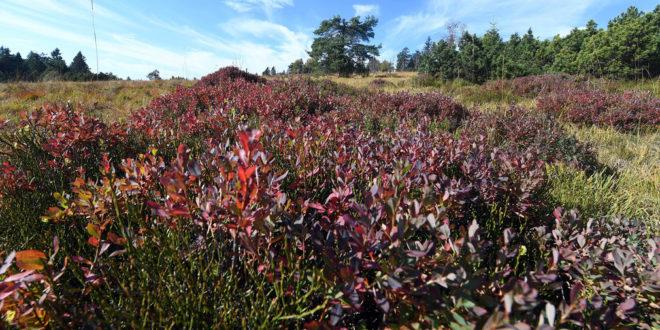 Naturschutzverbände ziehen eine Bilanz der Umweltpolitik des Landes