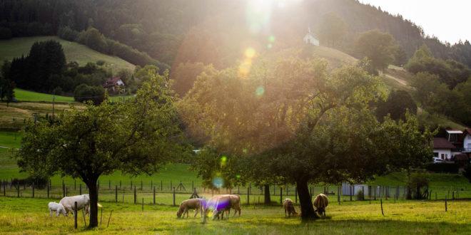 Projekt zum Schutz von Grünlandflächen im zentralen Schwarzwald