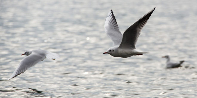 Schützen Sie sich vor der Vogelgrippe