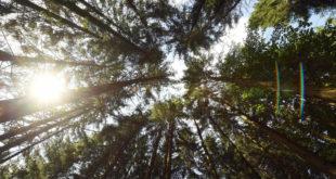 """""""Forest Management 4.0"""" treibt die Digitalisierung in der Forstwirtschaft voran"""