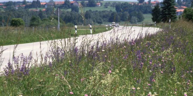 Straßenränder als Lebensraum für Pflanzen und Tiere