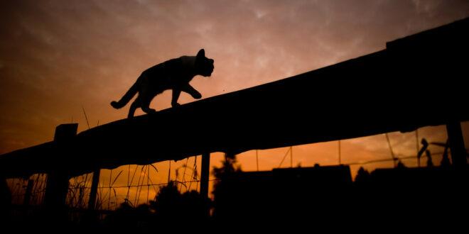 Tierschutzbeauftragter begrüßt Bemühungen um die Katzenschutzverordnung in Stuttgart