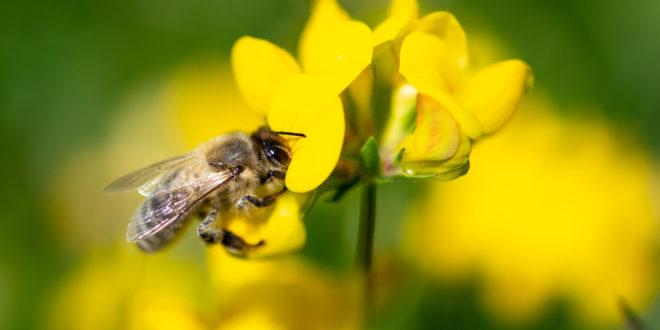 Untersteller setzt Biodiversitätstour fort