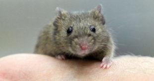 Weniger Tierversuche während des Studiums