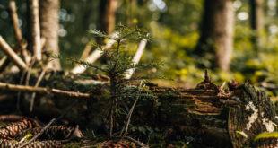 Wichtige Punkte der vorgestellten Waldstrategie