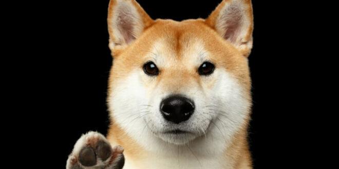 Wo kann man ShibaCash kaufen: Die neue Hunde-Meme-Münze?