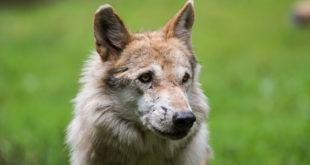 Viehtränen in Mühlenbach von Wolf